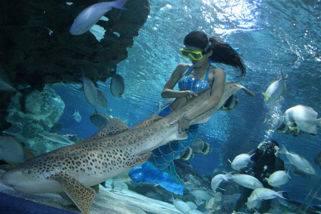 Mermaid in Beijing Aquarium