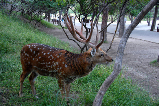 Animal in Chengde Summer Resort