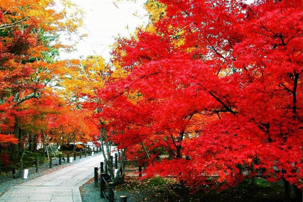 Fragrant Hills Park & Maple Trees