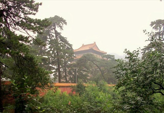 Trees in Ming Tombs