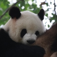 The Beijing Zoo