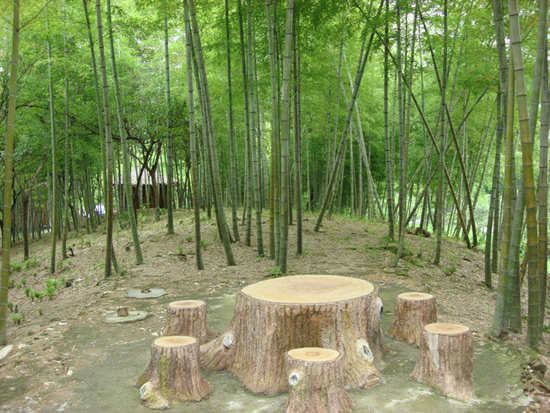 Culture Understanding-Bamboo Forest
