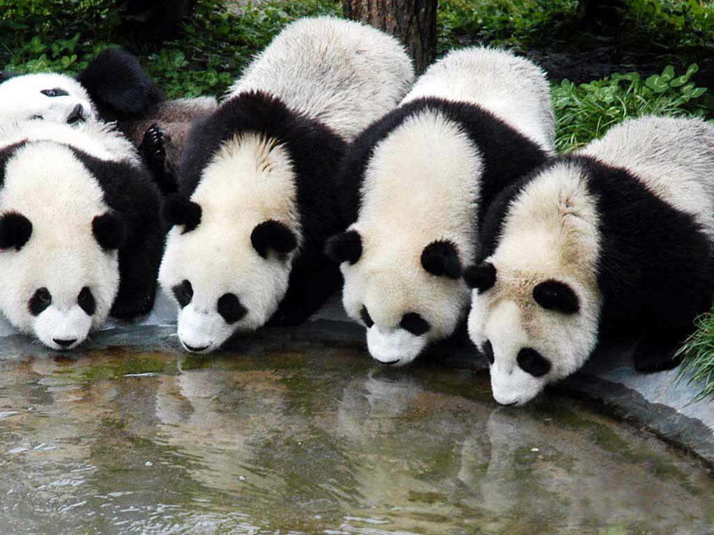 Sichuan photo