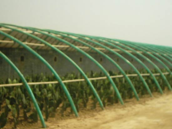 China Agriculture 2