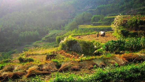 China Agriculture 6