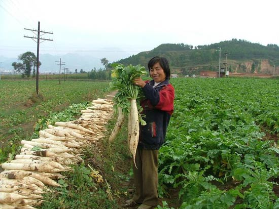 China Agriculture 11