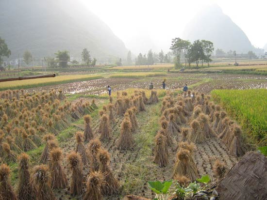China Agriculture 13
