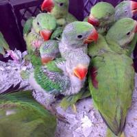 Nanning Flower and Bird Market