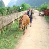Li River, Guilin Tours