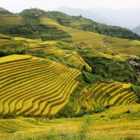 Longji Rice Terraces, Guilin Tours