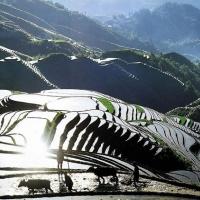 Longsheng terraced paddy fields