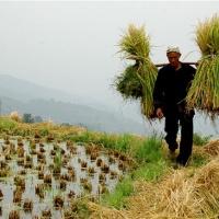 Tang'an Dong Village, Guizhou Tours