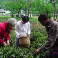 Meijiawu Tea Village, Hangzhou Tours