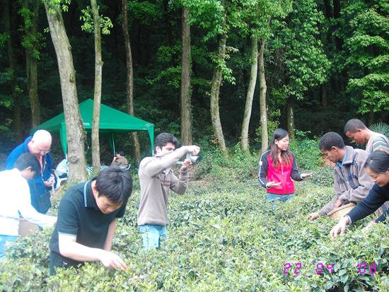 Meijiawu Tea Village, Hangzhou Travel Photos