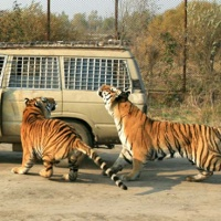 Siberian Tiger Park, Harbin Winter Tours