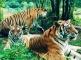 Siberian Tiger Park,Travel in Harbin