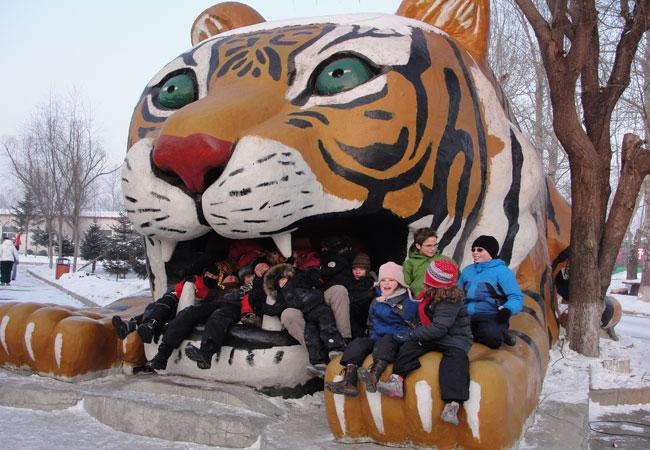 Harbin Tiger Park Siberian Tiger Park Photos Harbin