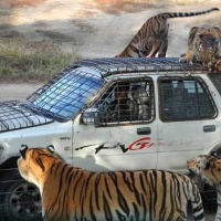 Siberian Tiger Park,Harbin Attractions