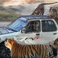 Siberian Tiger Park,Harbin Attractions