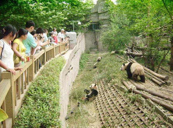 panda Bifengxia