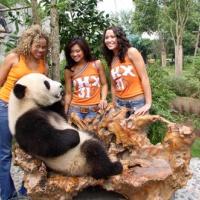 Chengdu Panda Breeding Centre