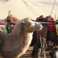 Echoing-Sand Mountain Dunhuang, Silk Road Tours