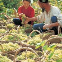 Grape Valley Turpan, Xinjiang Silk Road Tours