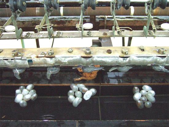 The Silk Factory, Suzhou Silk Factory, China Silk