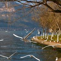 Dianchi Lake Kunming, Yunnan Tours