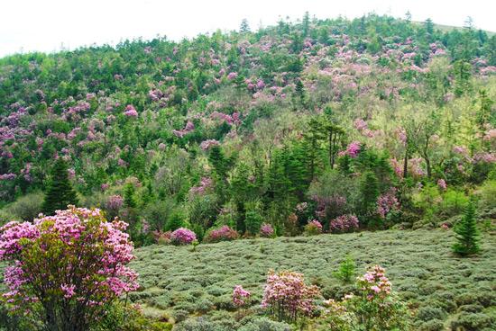 Mountain Laojun