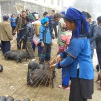 xijie fair Yuanyang