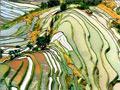 Yunnan Yuanyang Terraced Fields